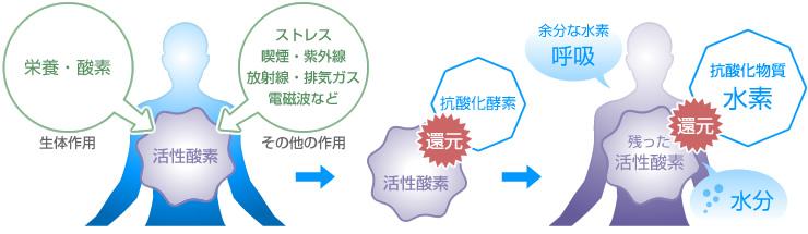 活性化酸素と水素の図